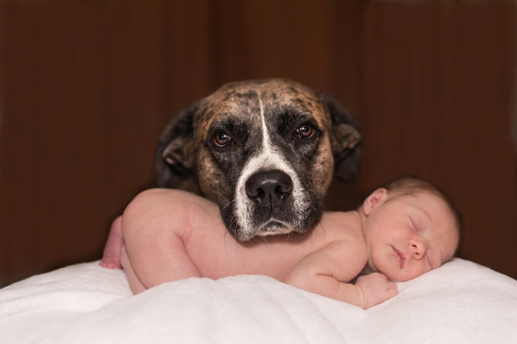 baby and dog-baby proofing your home